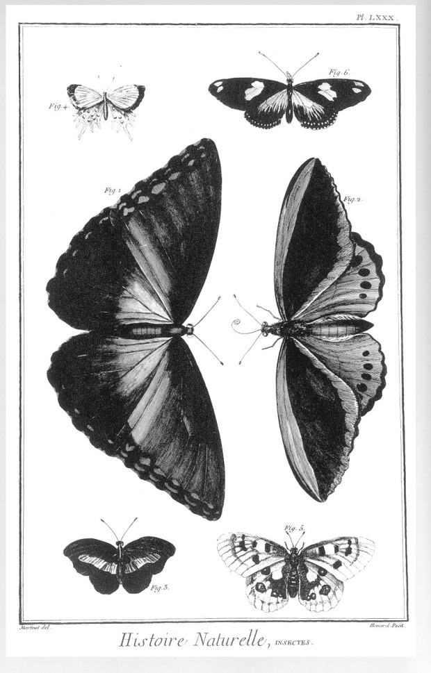 Natural History Insects plate_23_4_30