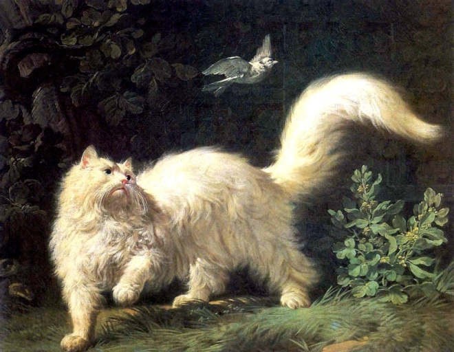 Un Chat Angora by Jean-Jacques Bachelier, (1724–1806).