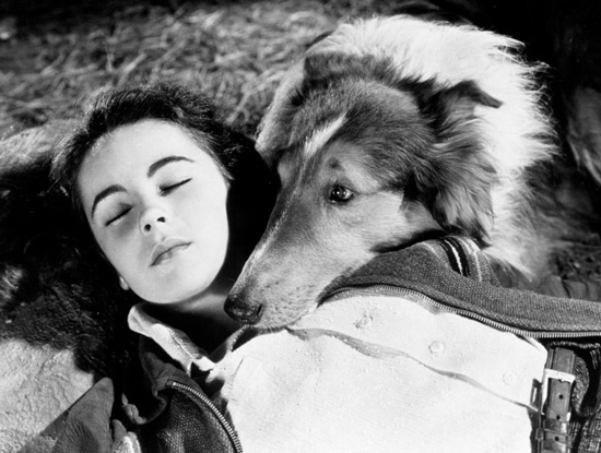 Elizabeth Taylor and Pal in Lassie Come Home, 1943.