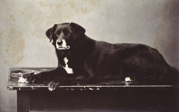 Sharp, Queen Victoria's favourite Collie, 1872.(Royal Trust Collection)