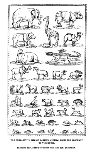 The Complete Size of Various Animals, Chart from Animal Tales by Peter Parley, 1835.