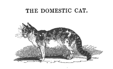 Image of Domestic Cat from Animal Tales by Peter Parley, 1835.(/em>