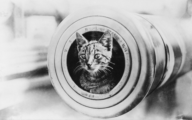 Ship's cat on the Encounter‍  resting inside the muzzle of a 6-inch gun.