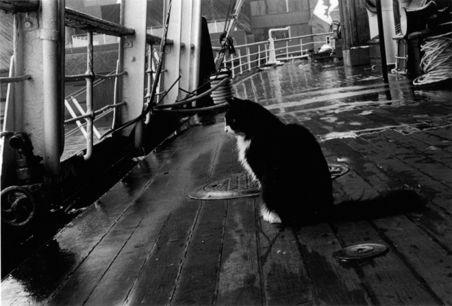 The ship's cat on board the CSS Acadia. (Image via Gregory MacKenzie, CC 3.0.