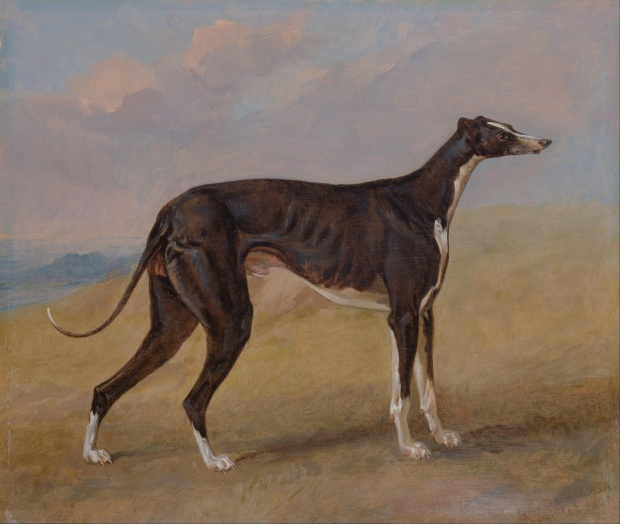 Turk, a greyhound, the property of George Lane Fox by George Garrard, 1822.