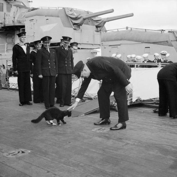 Winston Churchill pets Blackie, ship's cat of HMS PRINCE OF WALES, 1941. (Imperial War Museum.