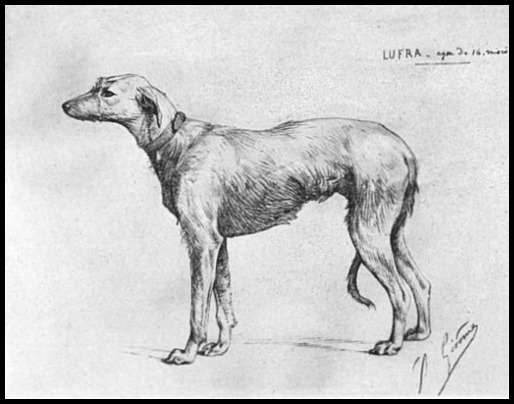 lufra illustration from scotch deerhounds and their masters 1894
