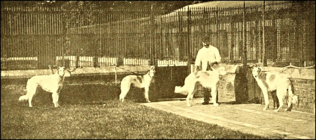 Borzois at Sandringham Kennels, 1906.(The Dog Book)