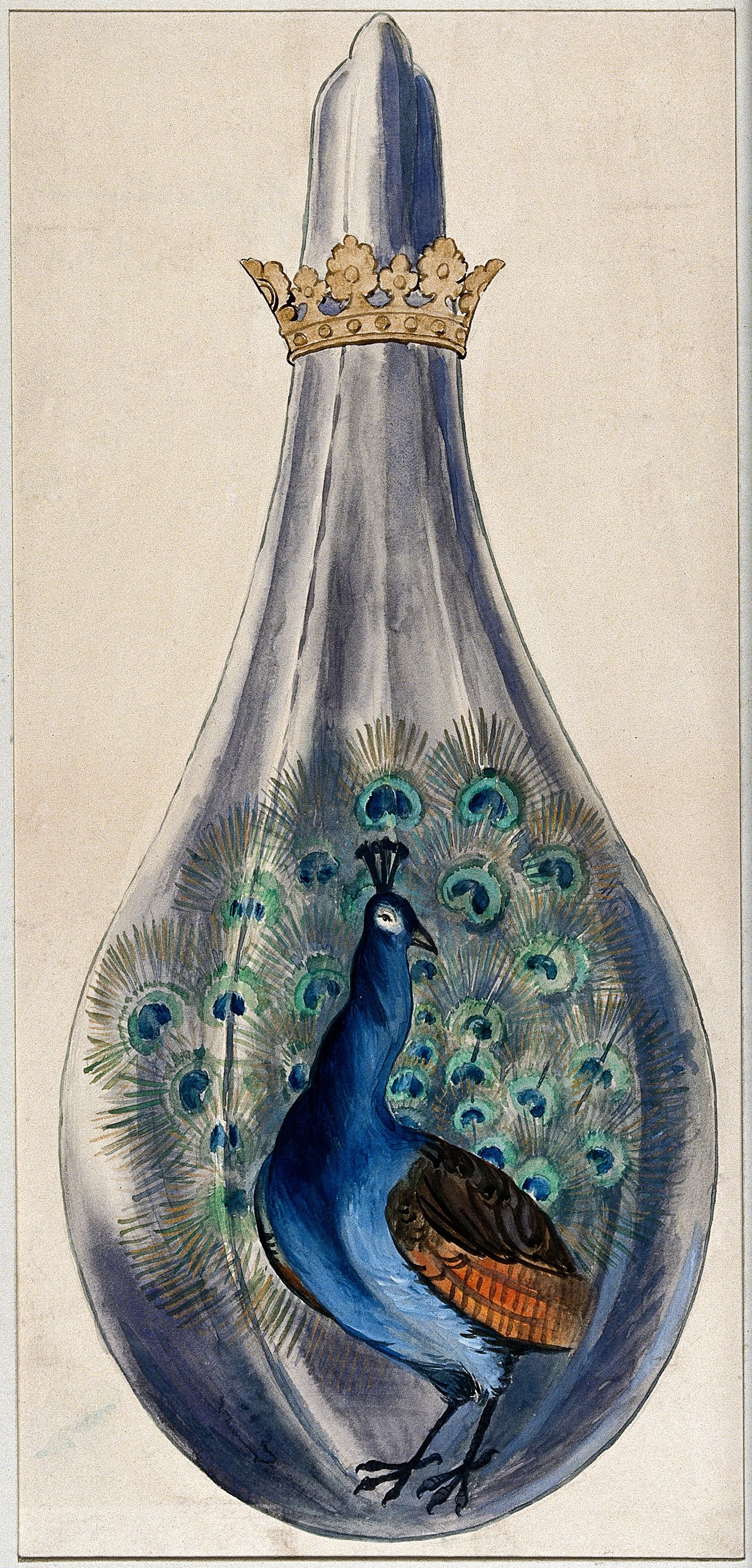 the peacock in myth legend and 19th century history author