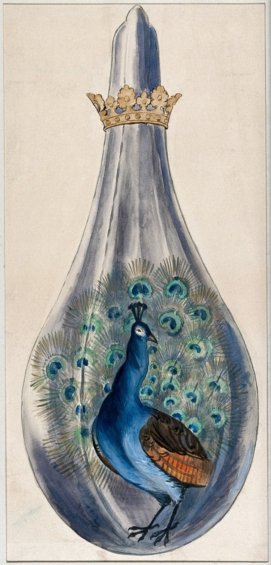 Peacock in a n Alchemical Flask, 16th century.(Image via Wellcome Library CC By 4.0)