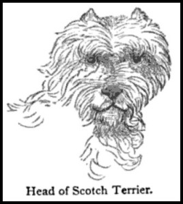 head of a scotch terrier via the young folks cyclopc3a6dia of common things 1880