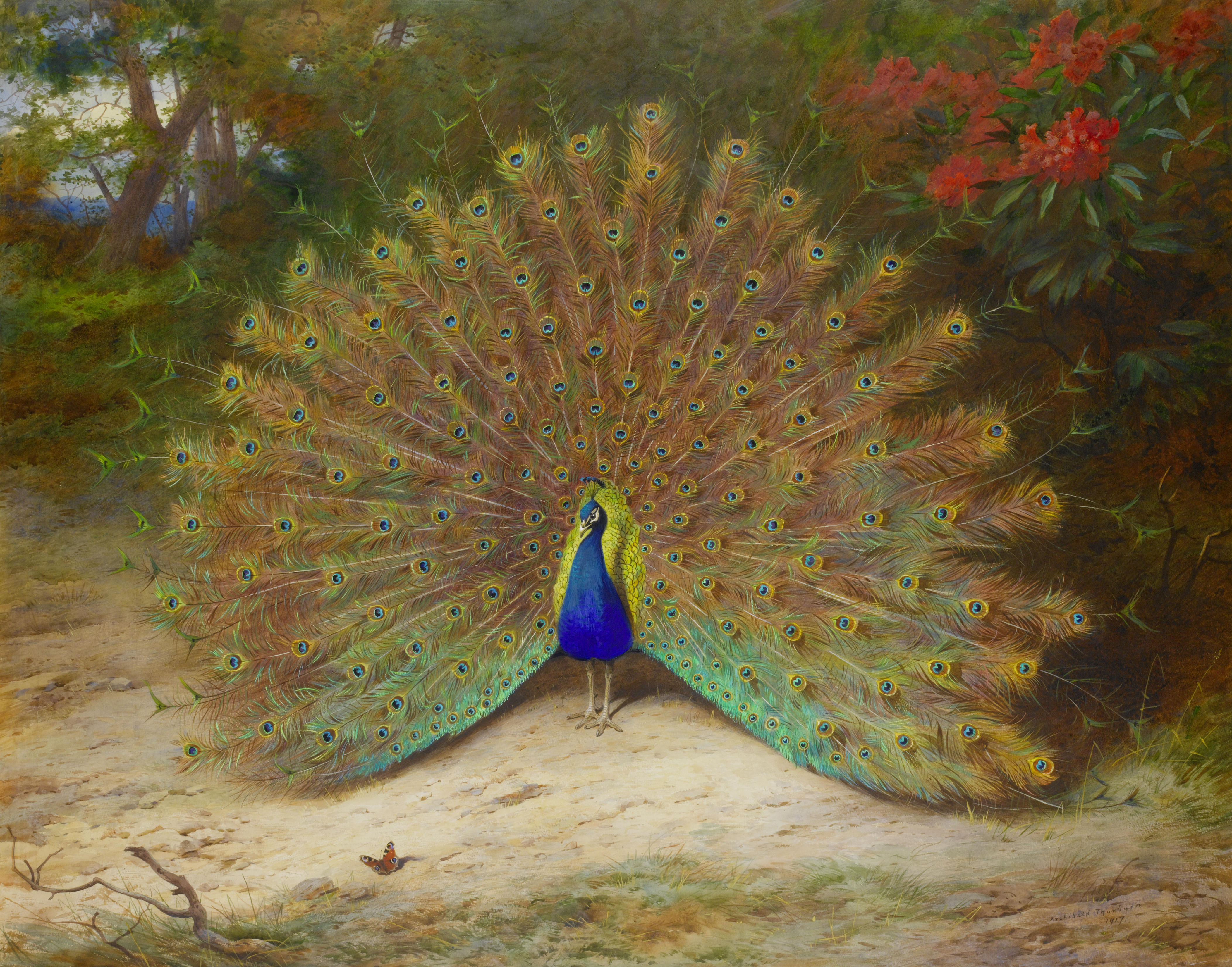 a6e68c3af The Peacock in Myth, Legend, and 19th Century History | Author Mimi ...