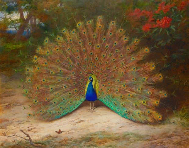 Peacock and Peacock Butterfly by Archibald Thorburn, 1917.