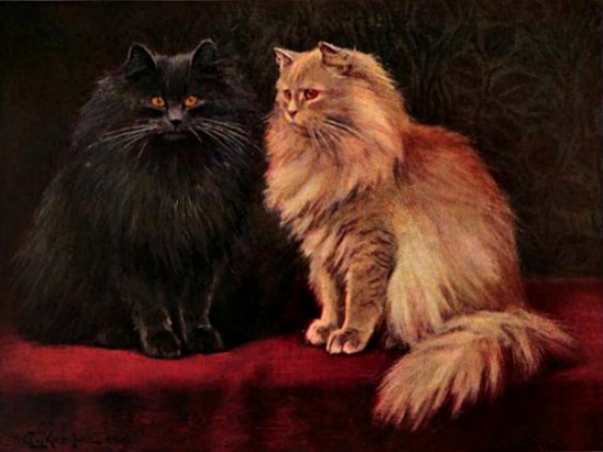Blue and Cream Persians Cats, Book of the Cat, 1903.