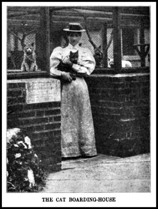 Cats' Boarding House at Battersea, The World Today, 1904.