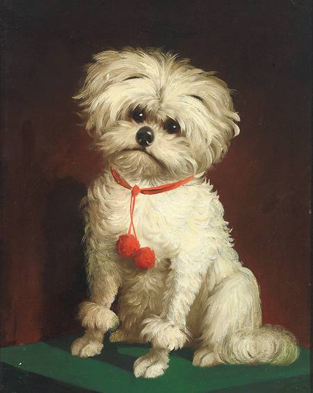 Portrait of a Maltese dog by Anonymous British Painter, 19th Century.