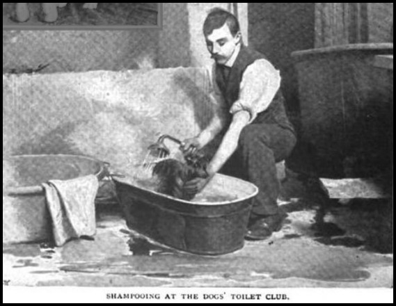 Shampooing at the Dog's Toilet Club, The Strand Magazine, 1896.