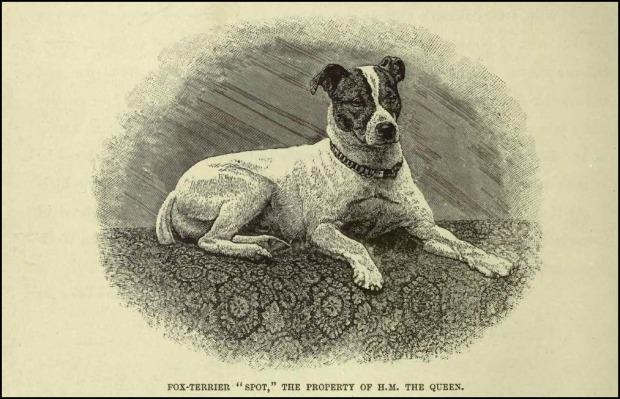 "Engraving of Queen Victoria's Fox Terrier ""Spot"" by Gustav Mützel (1839-1893)"