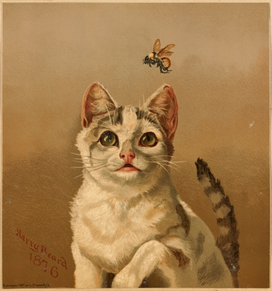 White Cat with Bee by Harry Beard, 1876.